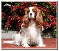 ally-mai 2011