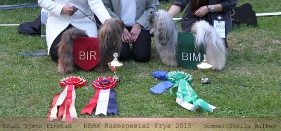bir-bim- rasespesialen-hjemmeside High