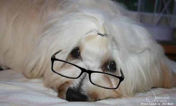 8 mnd-briller
